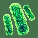 Пирогены | Альгимед Техно | Апирогенные пробирки и вода
